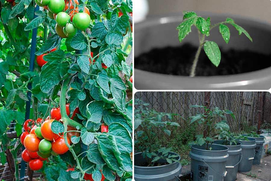 Guy and leggs sex
